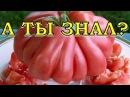 """Особенности выращивания томатов """"Бычье сердце"""""""