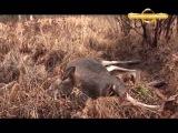 Загонная охота на копытных Охота и рыбалка в регионах России