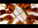 Посмотрите это видео на Rutube: «Самый сексуальный танец! Девушки зажигают!»