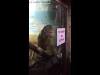 russkoe zoo porno