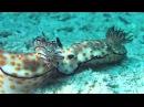 Подводный мир Красного моря (Египет) - невероятная красота!