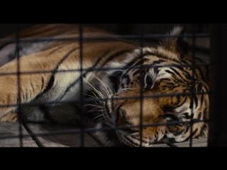 Мы купили зоопарк (2011) [720p]