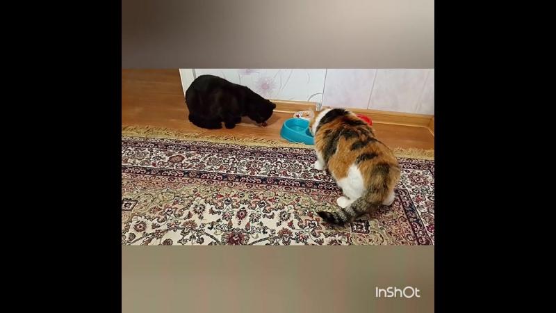Кошачья дедовщина или сначала своё съем, а затем и у младшей отожму😎😹😹