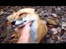 Человек и дикие животные, необычная дружба видео