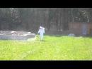 Акарицидная обработка участков от клещей комаров