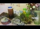 Рецепты натуральных шампуней в домашних условиях от Машино мыло