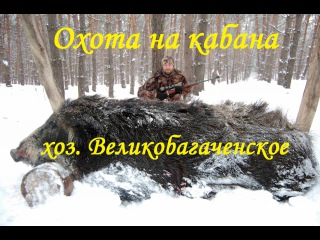 Охота на кабана в хозяйстве Великобагаченское (Полтавская обл.)