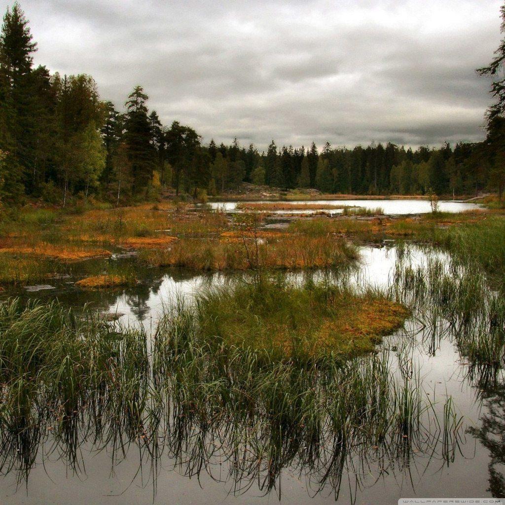 Северная природа