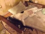 Кино про собаку и котика : в главной роли котик Кеша и собака Нюша. Фильм в HD 😜
