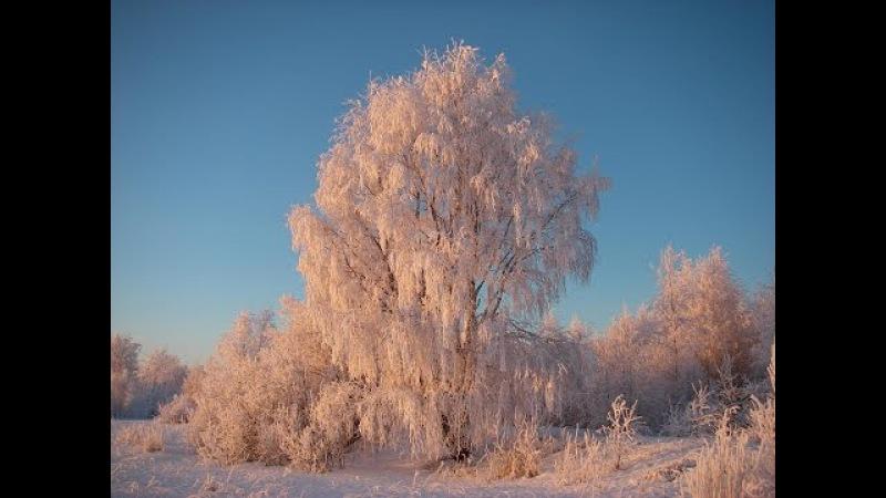 Поедем поедим Джон Уоррен в Архангельской области
