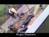 разозлили слона зря