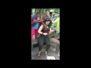 Орангутанг начал приставать к туристке