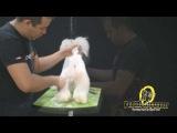 Tosa bebe estilizada com angulações by Miguel Tomé