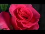С ДНЕМ 8 МАРТА! Красивое поздравление с праздником 8 марта!