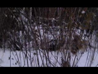 Уральский снежный барс