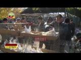Выставка-ярмарка голубей в Донецке