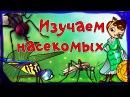 Мультфильм про Муху Цокотуху и других насекомых Развивающие мультики для детей