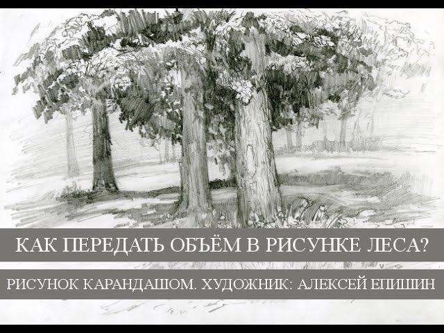 Как передать объём в рисунке леса? Рисунок карандашом. Художник Алексей Епишин