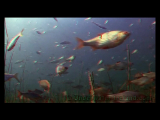 3D spring underwater in Grand Canal, Ireland(кр син 3d анаглиф)
