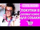 Покупки в зоомагазине для собаки ошейники адресники Догмама Влог