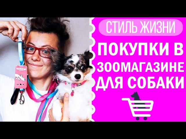 Покупки в зоомагазине для собаки ошейники адресники Догмама Влог смотреть онлайн без регистрации