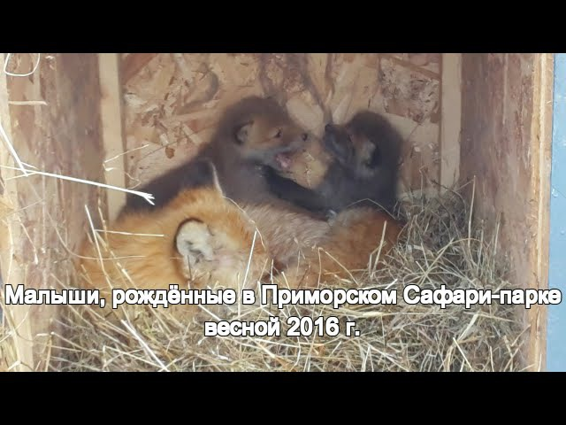 Малыши, рождённые в Приморском Сафари-парке весной 2016 г.