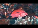 Предельная глубина -  298 - Красное Море. Ночные охотники.