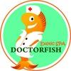 Пилинг рыбками - Exotic SPA (Нижний Новгород)