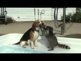 Настырный енот и собака