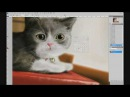 Speed painting Cat Adobe Photoshop CS 4