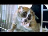 Лори - самые милые животные в мире [480p]