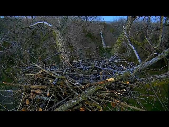 Arconic Eagles Iowa 11 14 16 555pm New name new cams new views for Liberty Justice's nest