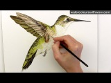 How to paint realistic hummingbird feathers in watercolor by Anna Mason