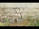Об'єктивно з Клімовим: Соснівка тріщить по швах