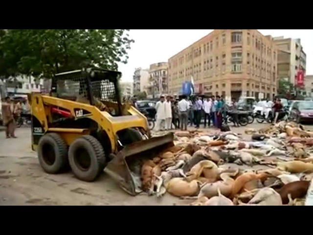 В Карачи дают шавлу сдачи (весомо и брутально)