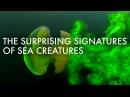 The surprising and invisible signatures of sea creatures Kakani Katija