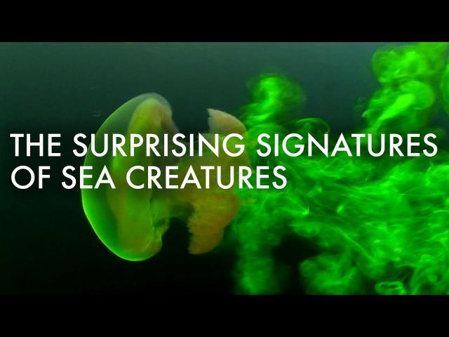The surprising (and invisible) signatures of sea creatures - Kakani Katija