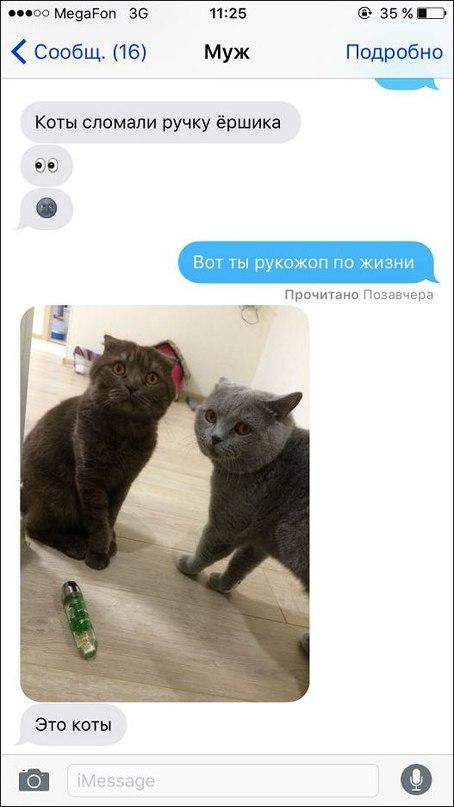 Ох уж эти коты...