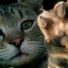 Ветеринар Гид - Здоровье домашних животных