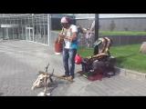Вот такой необычный музыкант играет на улицах Новосибирска))