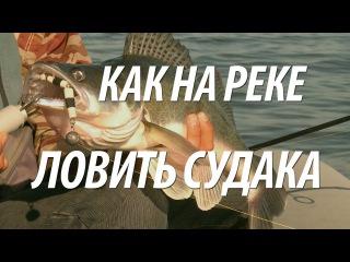 Рыбалка на судака на Волге. Приманки и снасти для ловля рыбы судак