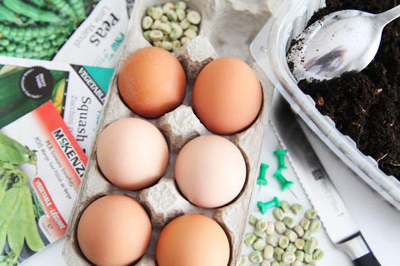 Яичная скорлупа для рассады. Как правильно подготовить яичную скорлупу