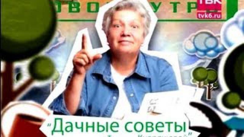Дачные советы Советы тети Тани Удобрения для помидоров