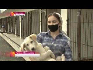 В Чечне состоялось открытие первого современного приюта для бездомных животных
