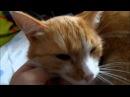 кот мурлычет