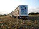 Solta de Pombos de Almansa para Dist do Porto 6h10 30 05 2009 PORTUGAL
