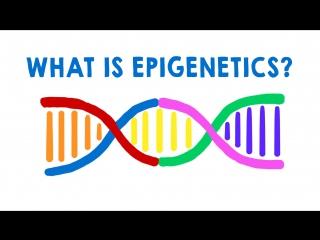 Что такое эпигенетика?