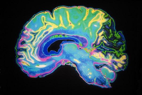 7 ошибок, которые ежедневно совершает наш мозг