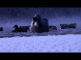 Vlog: поездка на лебединое озеро. / Trip to Swan Lake.