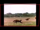 НАШИД - ЛЬВЫ ТАУХИДА Best Nasheed - LIONS Tauhid-SAEIsPh6mPk-MP4  480p.mp4